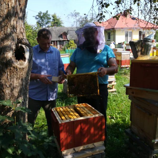 Przezimowane rodziny Pszczele 2020