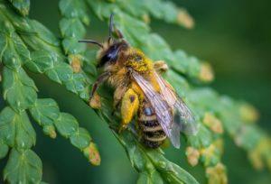 Sezon 2019 – nasze pszczoły wyjeżdżają w Świat!